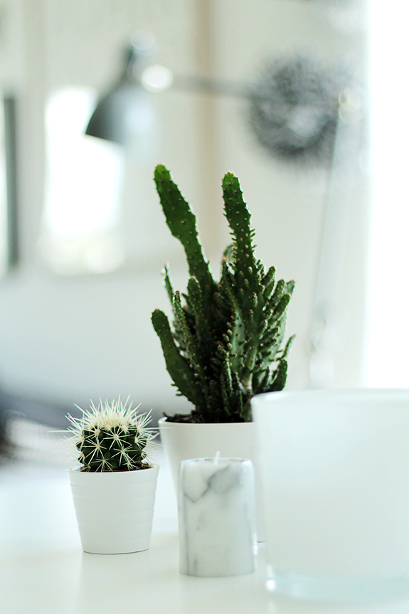 Kaktus och marmor - fixaodona.se