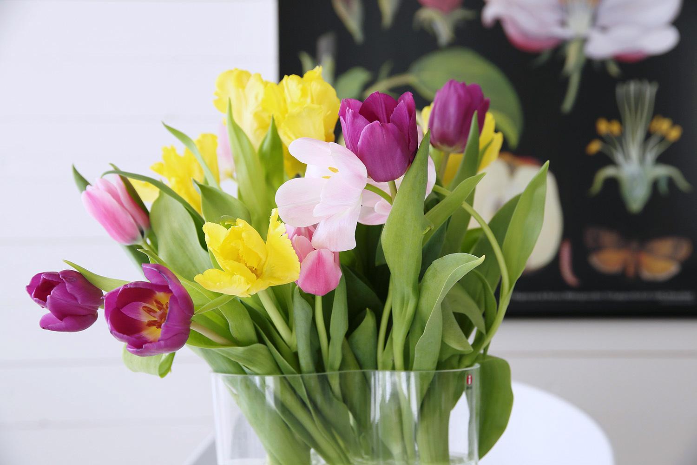 En enkel tulipan... - fixaodona.se