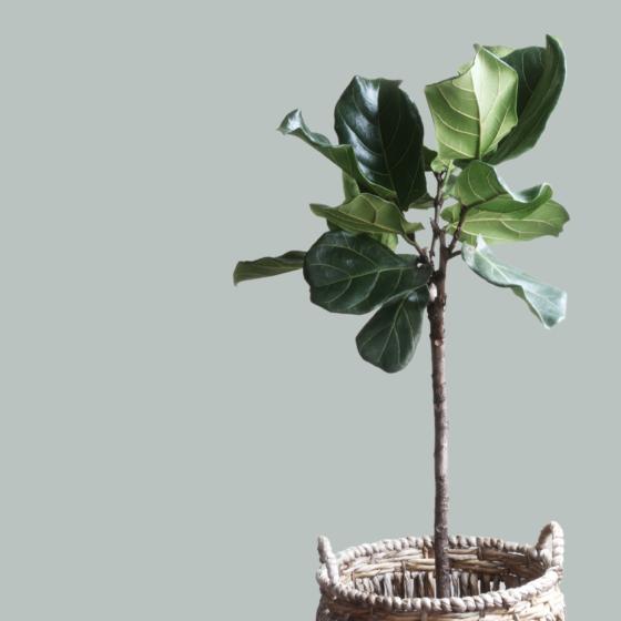 Snygg väggfärg till gröna växter - hildurblad.se